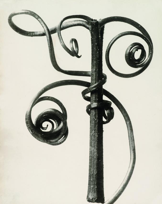 Cucurbita, Kürbis, Ranken, vor 1928